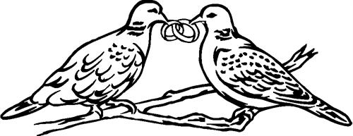 doves14-with-rings