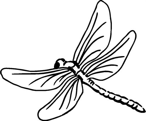 dragonfly07