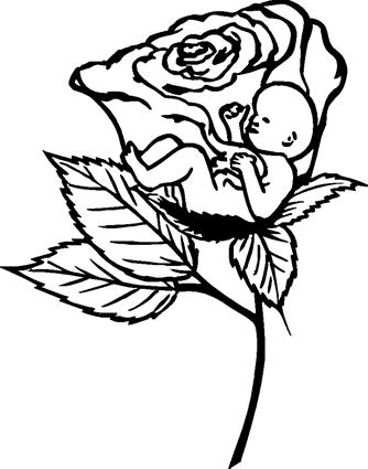rose-with-baby-inside