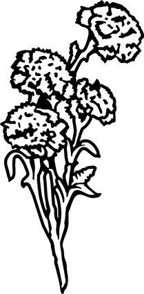carnations01