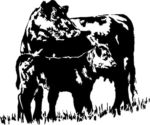 cow02-with-calf
