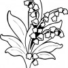 lily-of-the-valley03