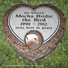 Mocha Birdie brought love and companionship to her family of office-mates.